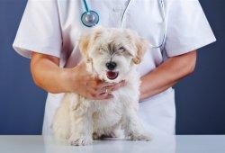 【問問寵物醫生】寵物醫生線上免費諮詢