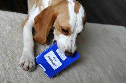 寵物犬准照
