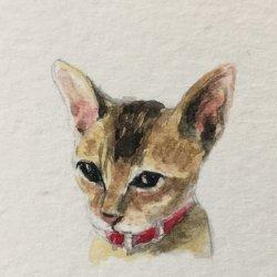 可愛動物繪畫班課程